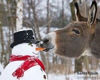 ロバと雪だるま