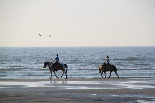 equestrian-456018_640