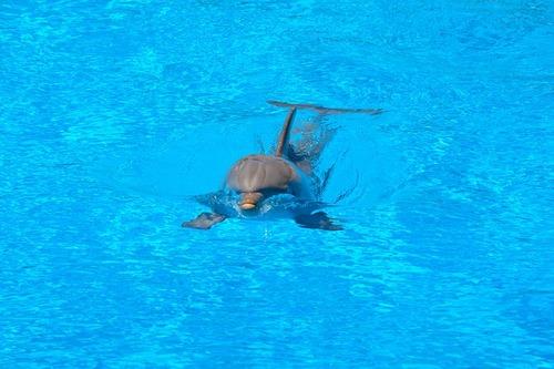 dolphin-1018685_640