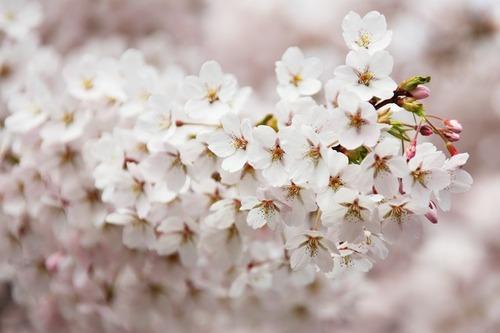 bloom-2525_640