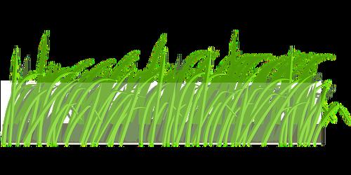 lawn-297043_640