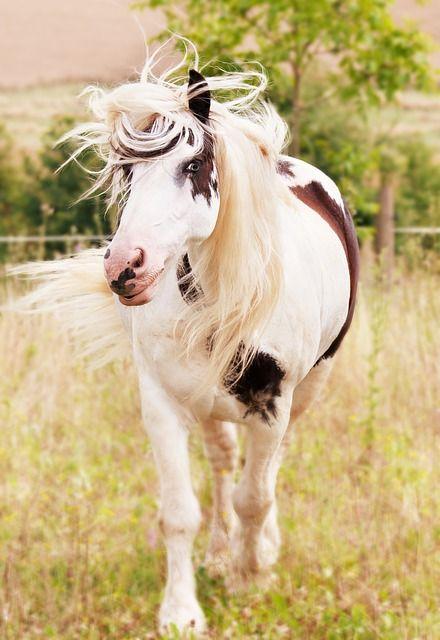 horse-1198001_640