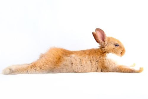 rabbit-1080539_640
