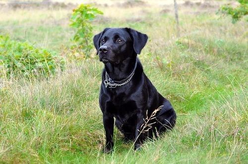 dog-1060323_640
