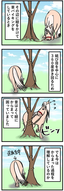 木に巻きつく1