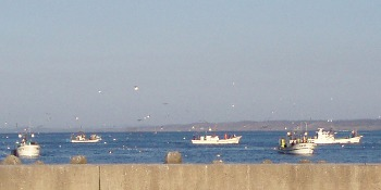 網入れ中の漁船