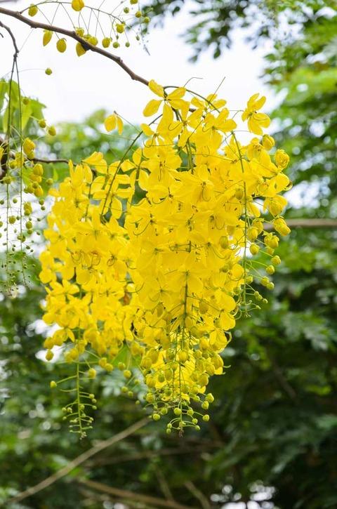 桂皮の花pixta_13918736_M