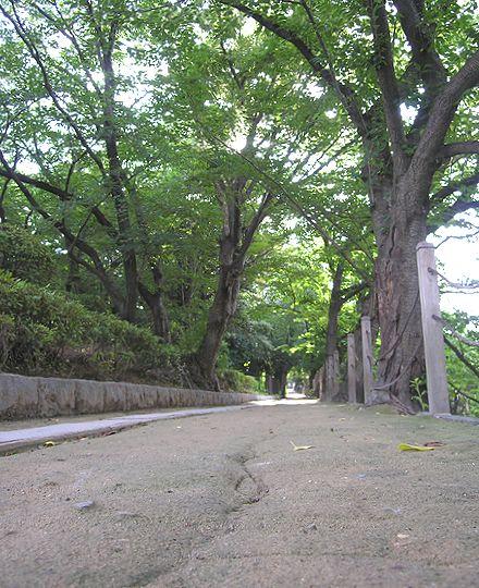 赤坂ふれあい道