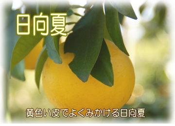 hyuganatu4