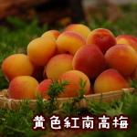 黄色紅南高梅