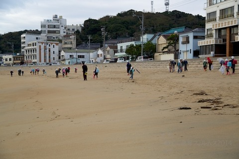 ウミガメ隊_篠島_2014-11-05 07-44-04