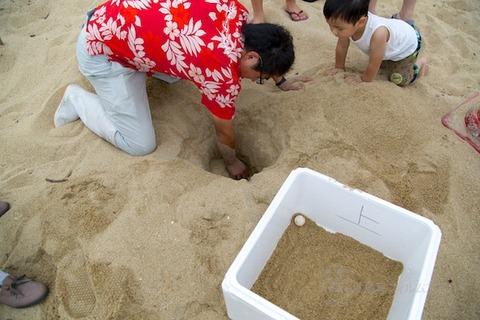 ウミガメ隊_産卵_2014-07-30 15-53-17