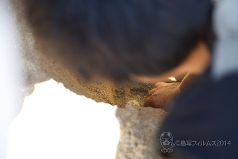 ウミガメ隊_産卵_2014-07-05 14-27-45