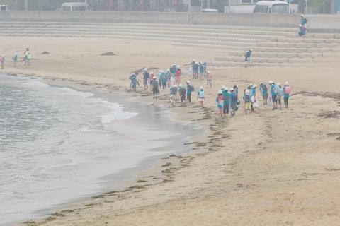 篠島ウミガメ隊_2017-05-31 07-43-49 - 2017-05-31 07-43-49