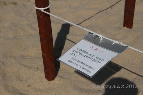 ウミガメ産卵_篠島_前浜_2011-06-28 15-20-54