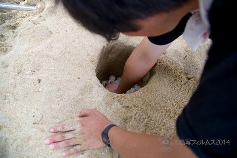 ウミガメ隊_産卵_2014-07-14 17-10-03