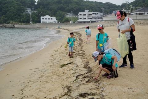 篠島ウミガメ隊_2016-06-22 07-49-09