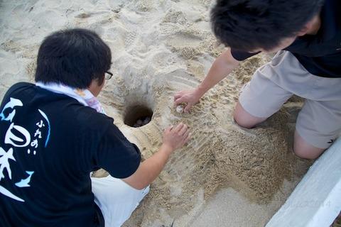 ウミガメ隊_産卵_2014-07-14 17-49-17