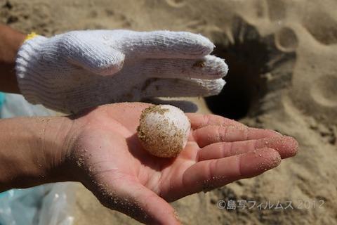 ウミガメ産卵_篠島_前浜_2011-06-28 14-59-39