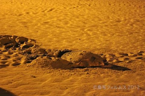 ウミガメ産卵_篠島_前浜_観光_2011-06-27 21-20-20