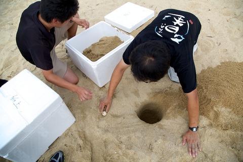 ウミガメ隊_産卵_2014-07-14 16-58-16