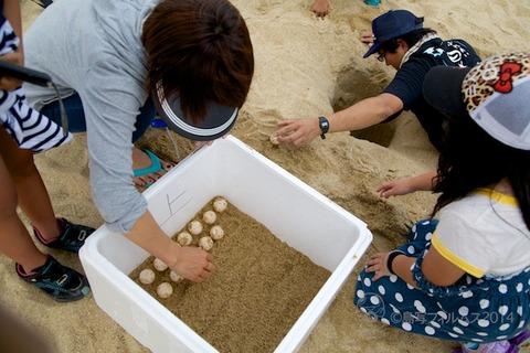ウミガメ隊_産卵_2014-07-08 14-32-13