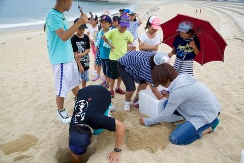 ウミガメ隊_産卵_2014-07-08 14-19-28
