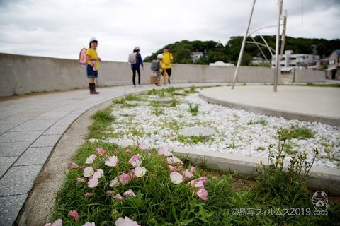 篠島ウミガメ隊_2019-06-12 07-54-39