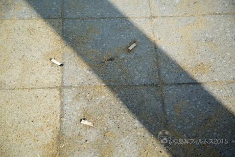 ウミガメ隊_2015-08-05 07-22-36