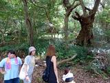 森散策・巨樹
