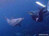 イルカと遊ぶ!