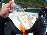 御蔵島の天然水