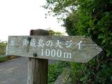 御蔵島の大ジイ
