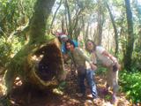 巨樹がいっぱい!
