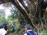 南郷巨樹の森