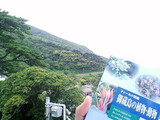 御蔵島巨樹の森