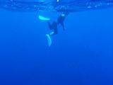 御蔵島黒潮ブルー!