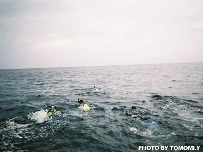 大海原へドルフィンスイム