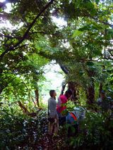 御蔵島の森