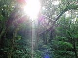 御蔵島の豊かな森