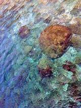 御蔵島の海