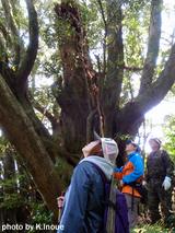 御蔵島・巨樹の森