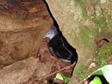 オオミズナギドリの巣穴