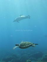 イルカとカメ