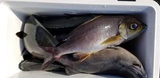 24日の釣友達の釣果