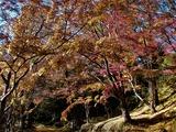 用作公園の紅葉 (21)
