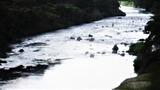 天降川の鮎釣り (3)