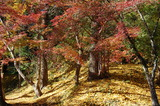 用作公園の紅葉 (11)