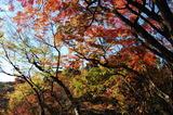 用作公園の紅葉 (4)