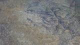 29日一ッ瀬川で見たハミ跡